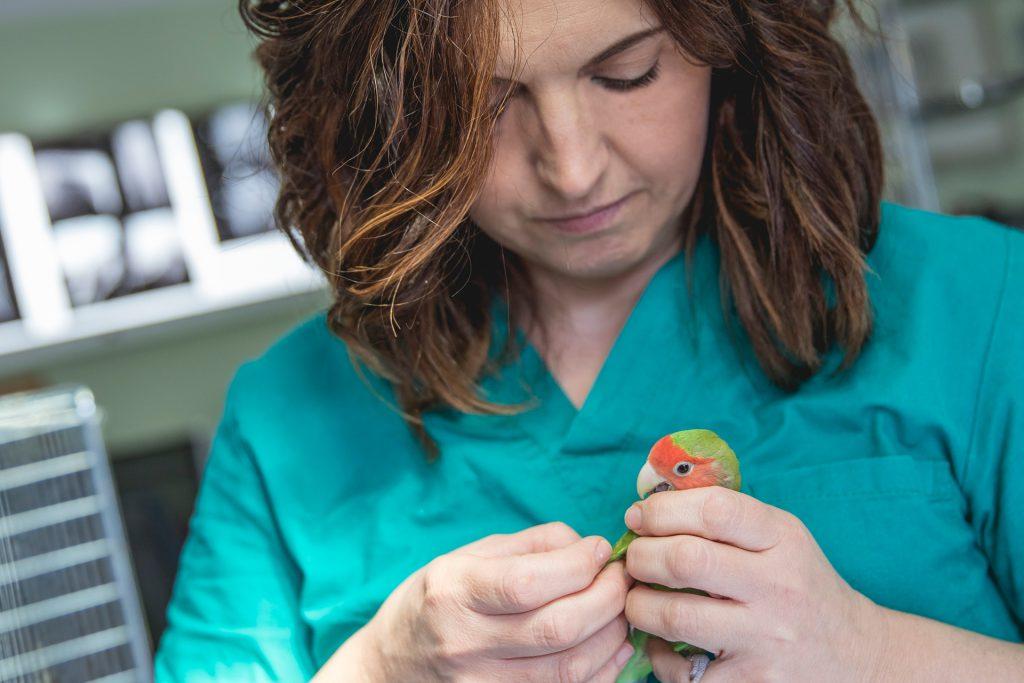 Clinica Veterinaria Città di Forli assistenza mission diagnostica